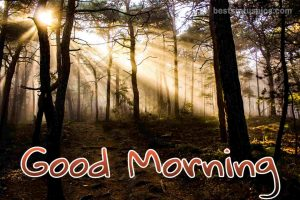 Good morning nature with sunrise in Forest pic
