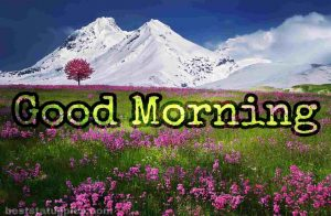 Good morning nature with flower garden pic