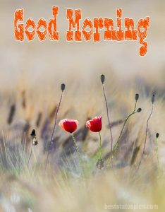 Good morning nature with flowers image for whatsapp