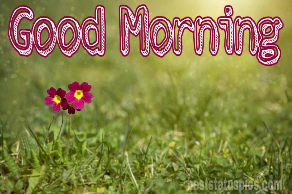 Good morning nature with flowers HD image