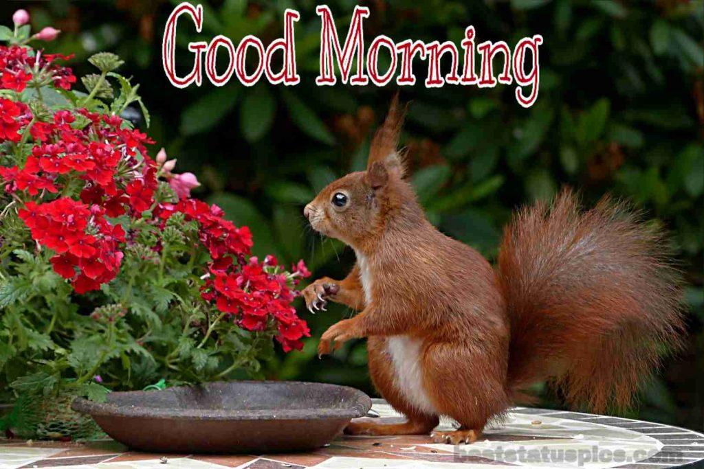 Good morning nature with animal image whatsapp