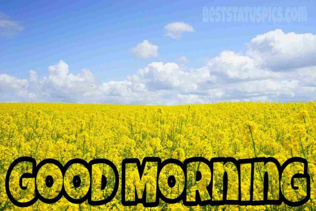 good morning scenery for WhatsApp DP