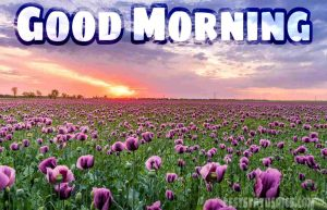 Good morning nature with flower garden image for whatsapp dp