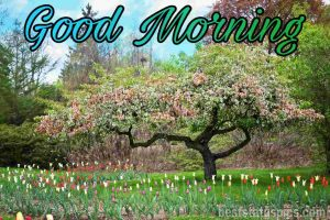 Good morning nature image for whatsapp friend
