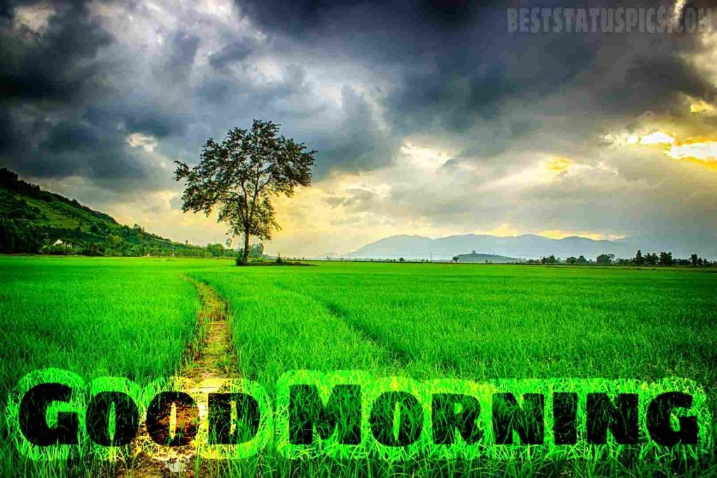 Good morning village nature paddy field image