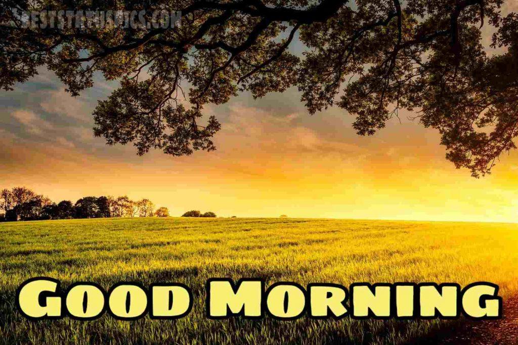 Good morning paddy field nature image