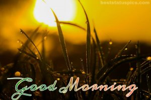 Good morning nature pics with dewdrops on leaves