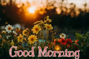 Good morning nature flowers image HD