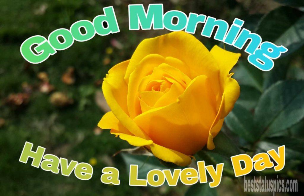 Good morning yellow rose love image