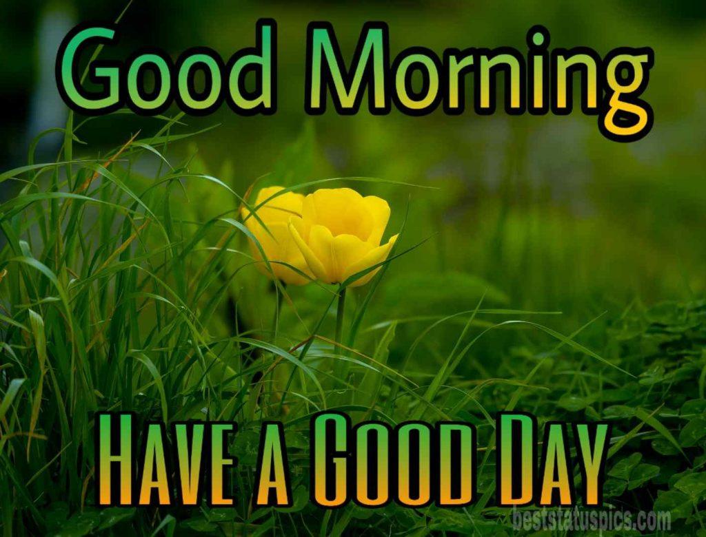 Gud morning yellow rose image