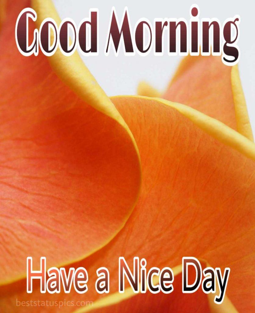 Good morning yellow rose image for whatsapp dp