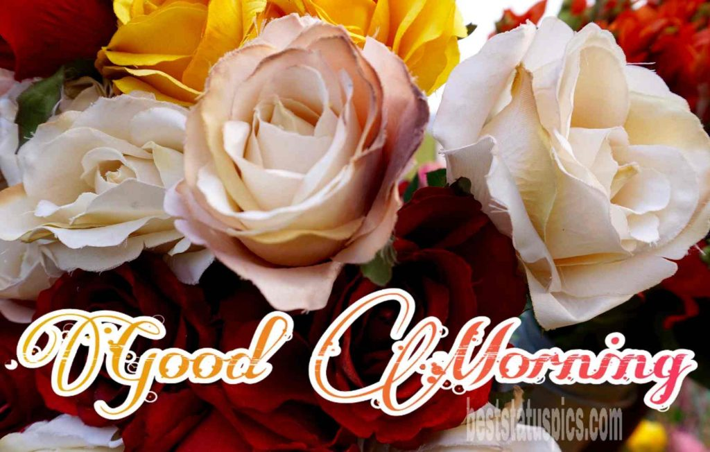 Good morning yellow white rose image for friends