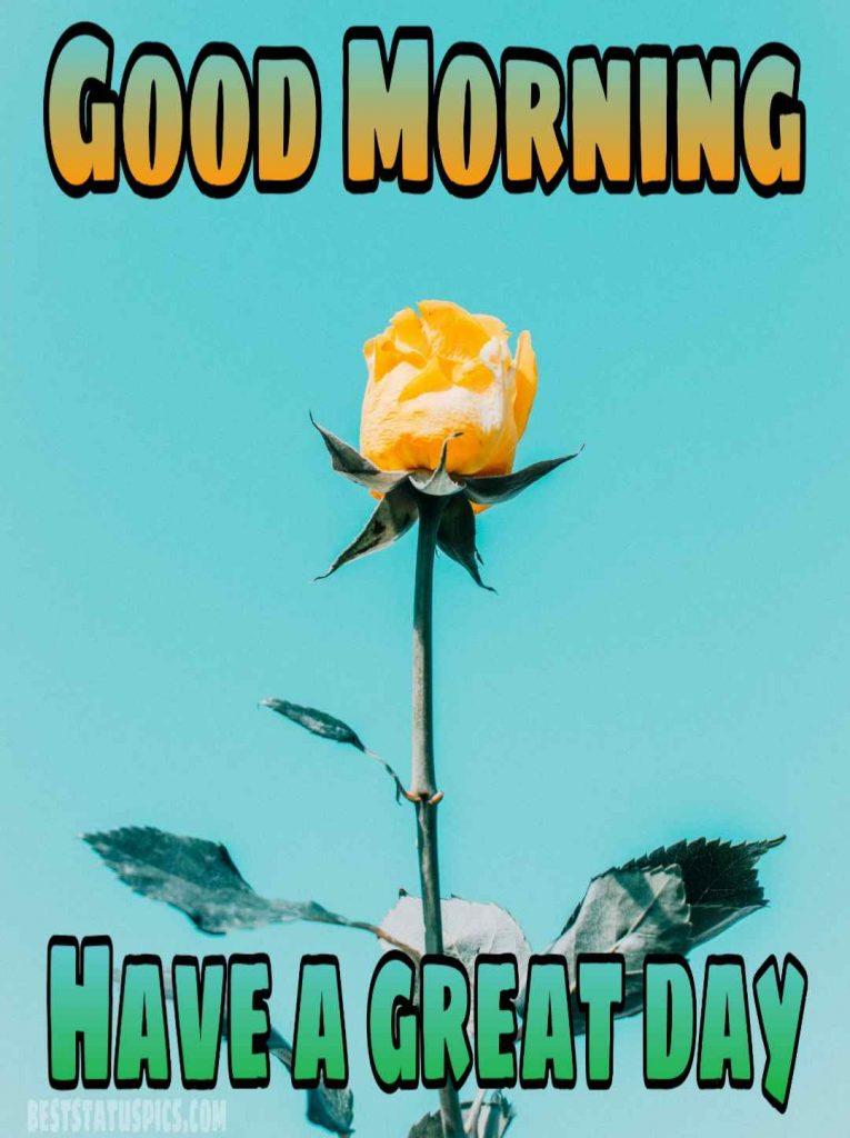 Good morning yellow rose and sunshine image