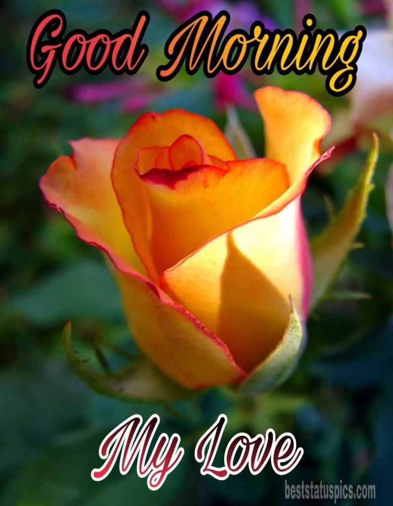 Romantic good morning yellow rose image