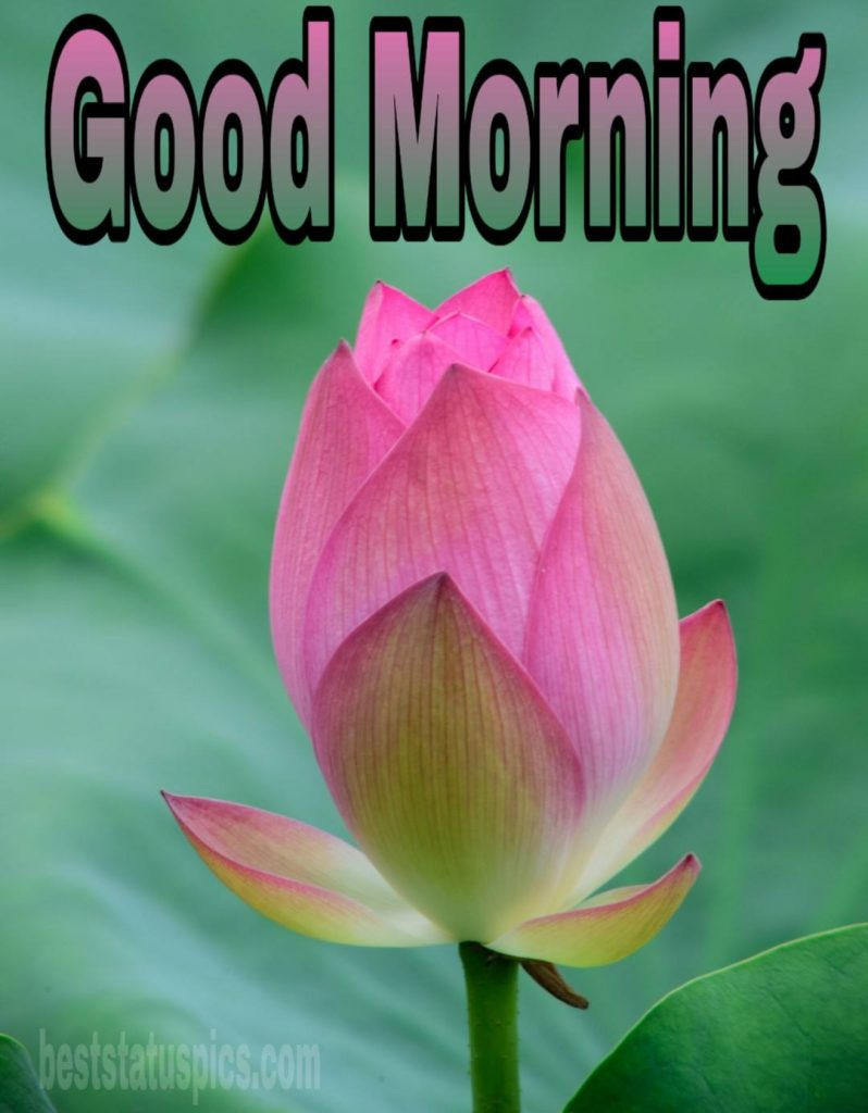 Good morning lily for whatsapp