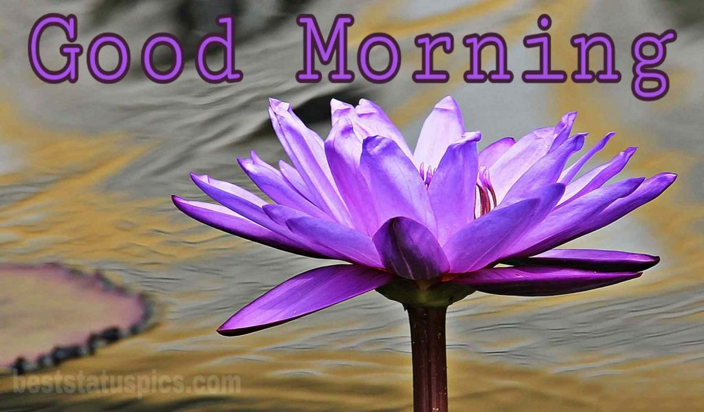 Good morning blue lily image