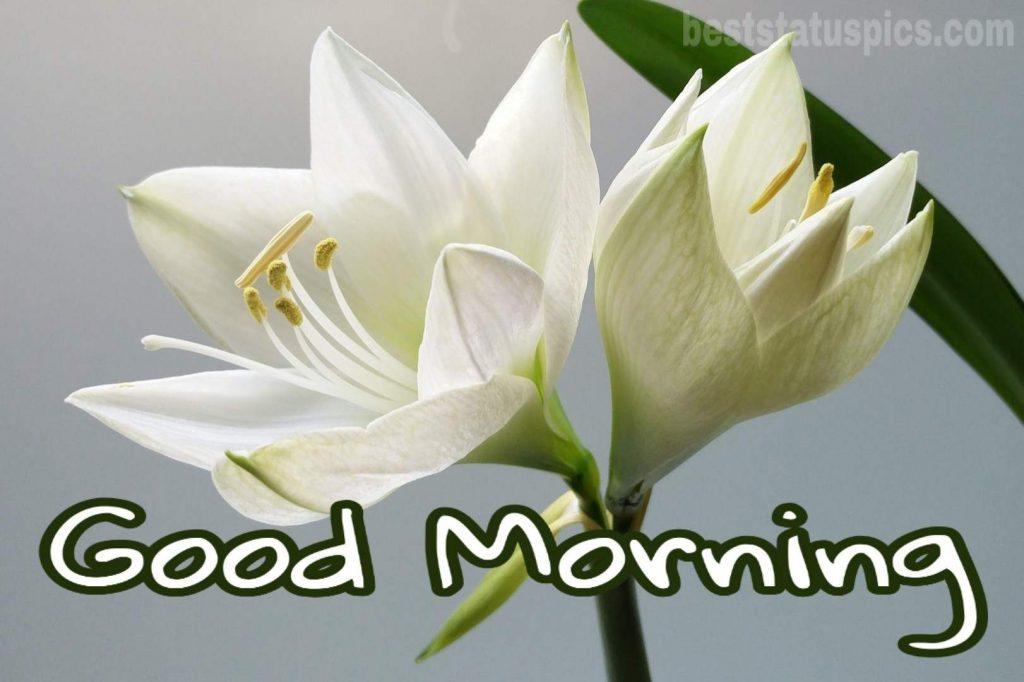 Good morning white lily image