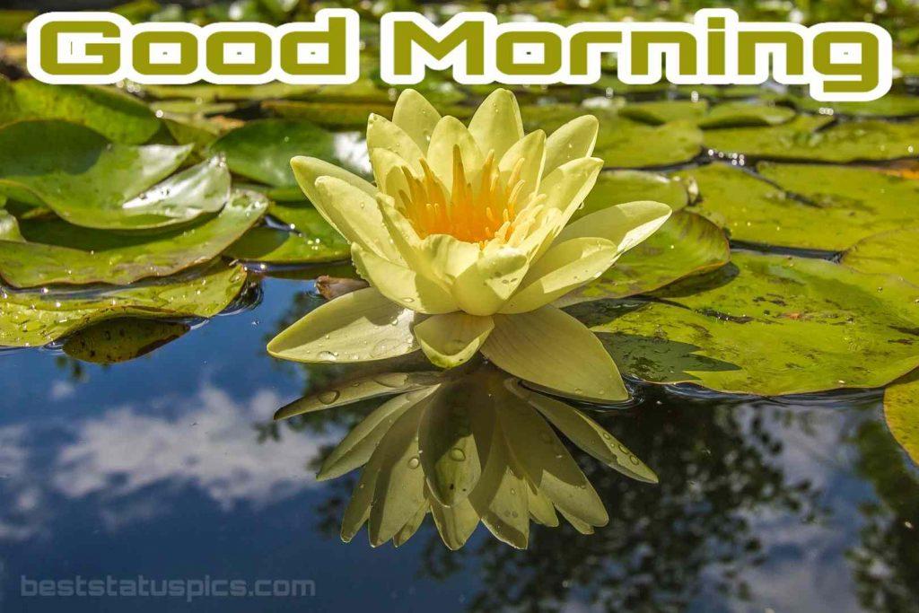Good morning yellow lily image