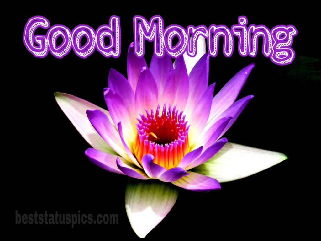 Good morning purple lily pic