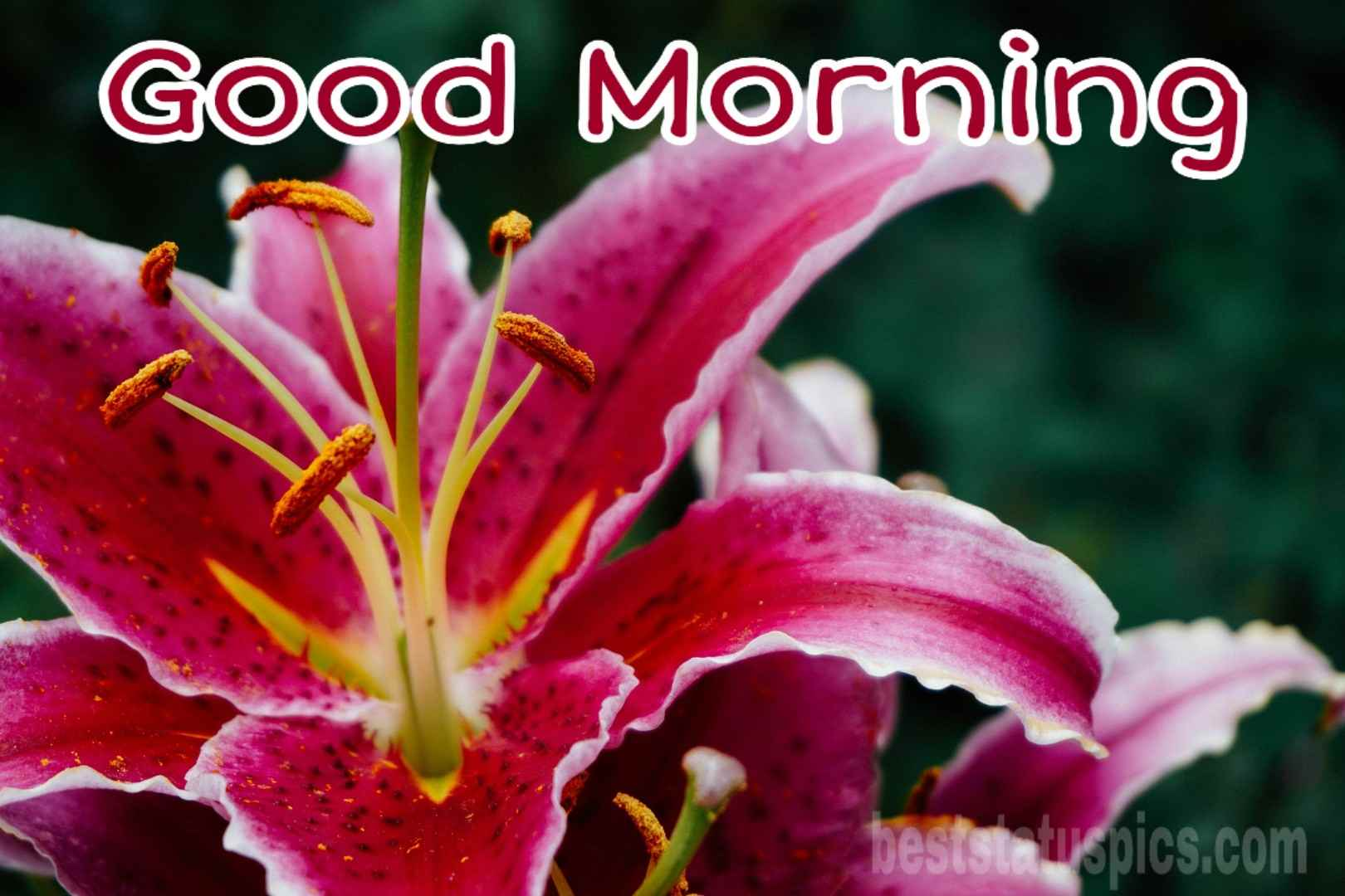 51 Good Morning Lotus Lily Flower Images Hd 2021 Best Status Pics