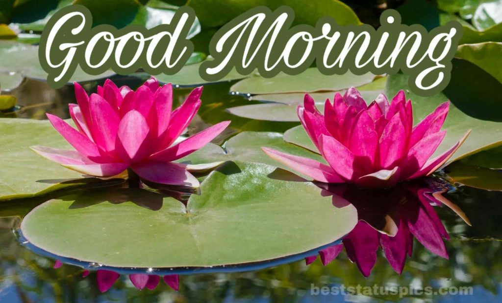 Good morning water lily image