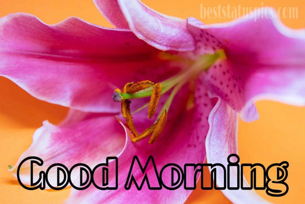 Good morning pink lily image