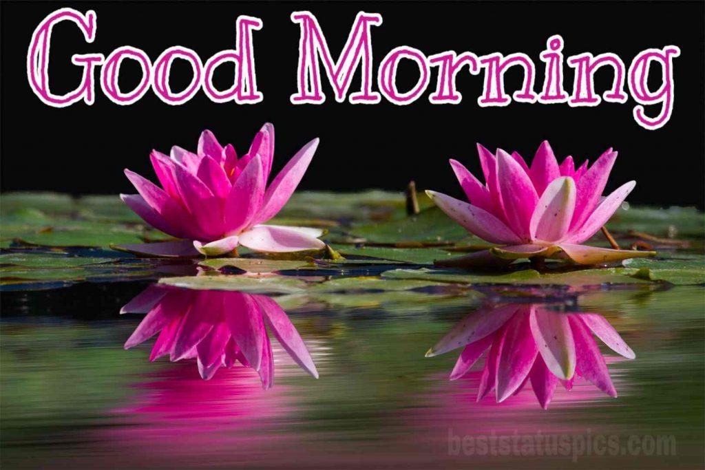 New good morning lotus flower HD