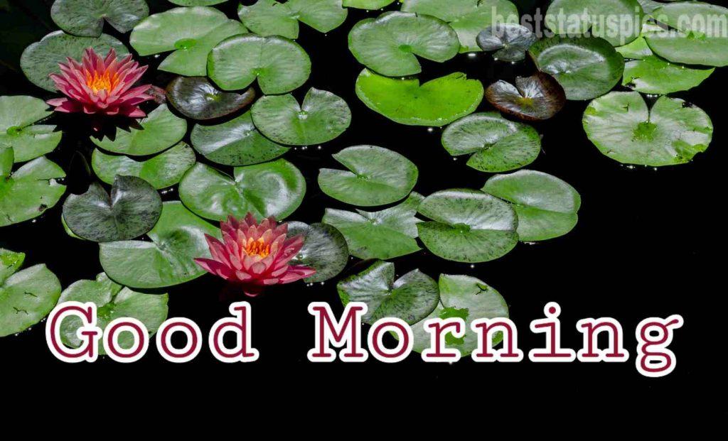 Good morning lotus and nature image