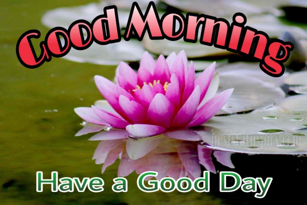 Good morning pink lotus image