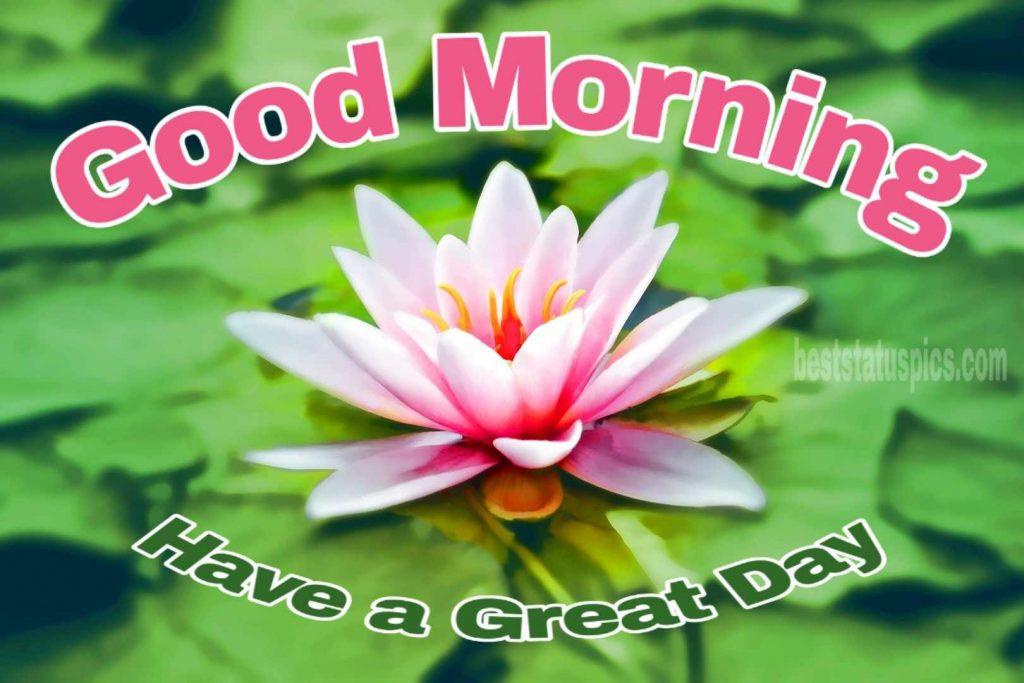 Good morning pond lotus image