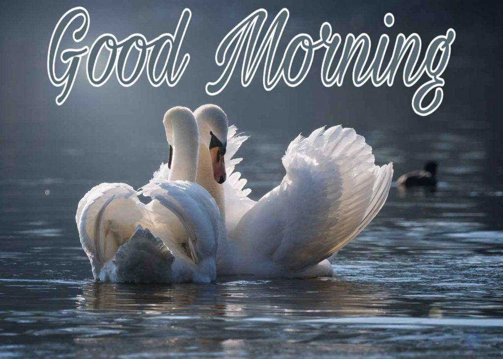 Good morning image couple