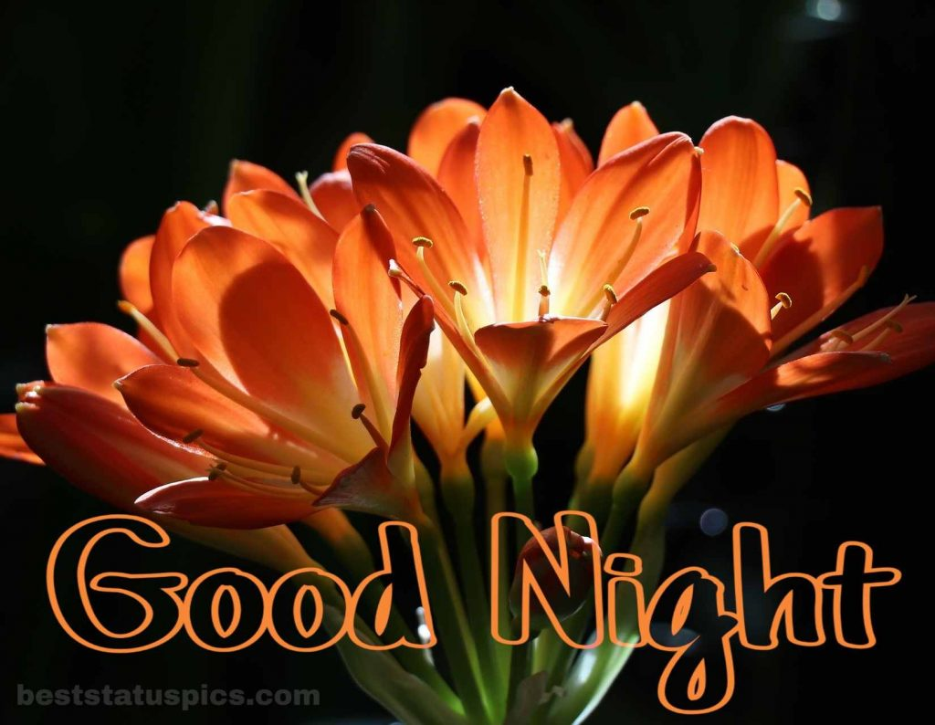 Good night flowers image download