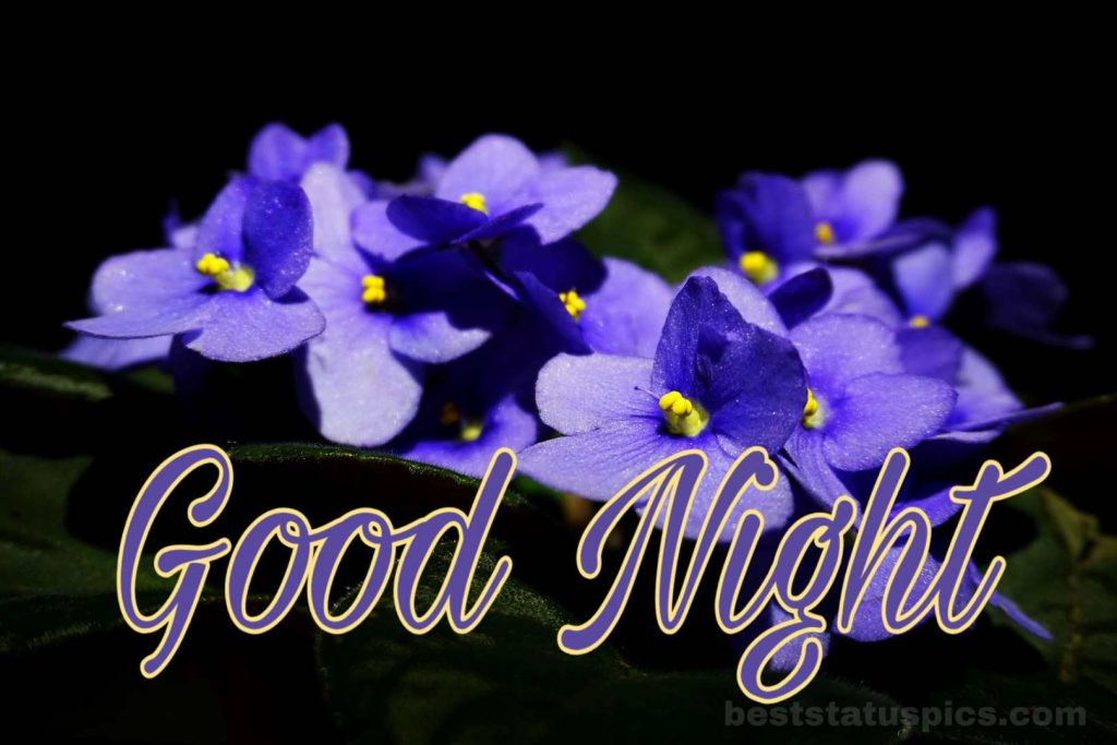 Good night friends image with flowers