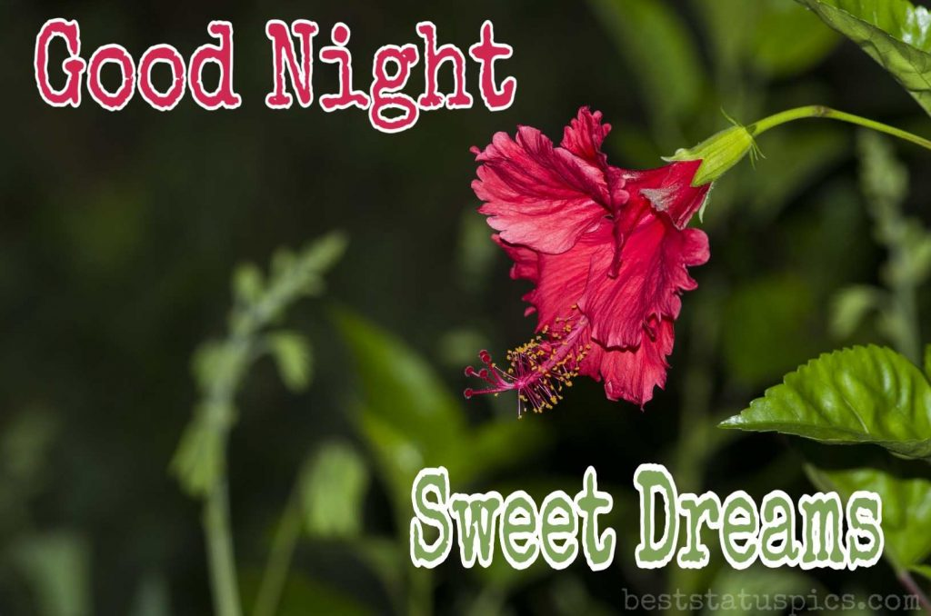 Sweet good night flowers image