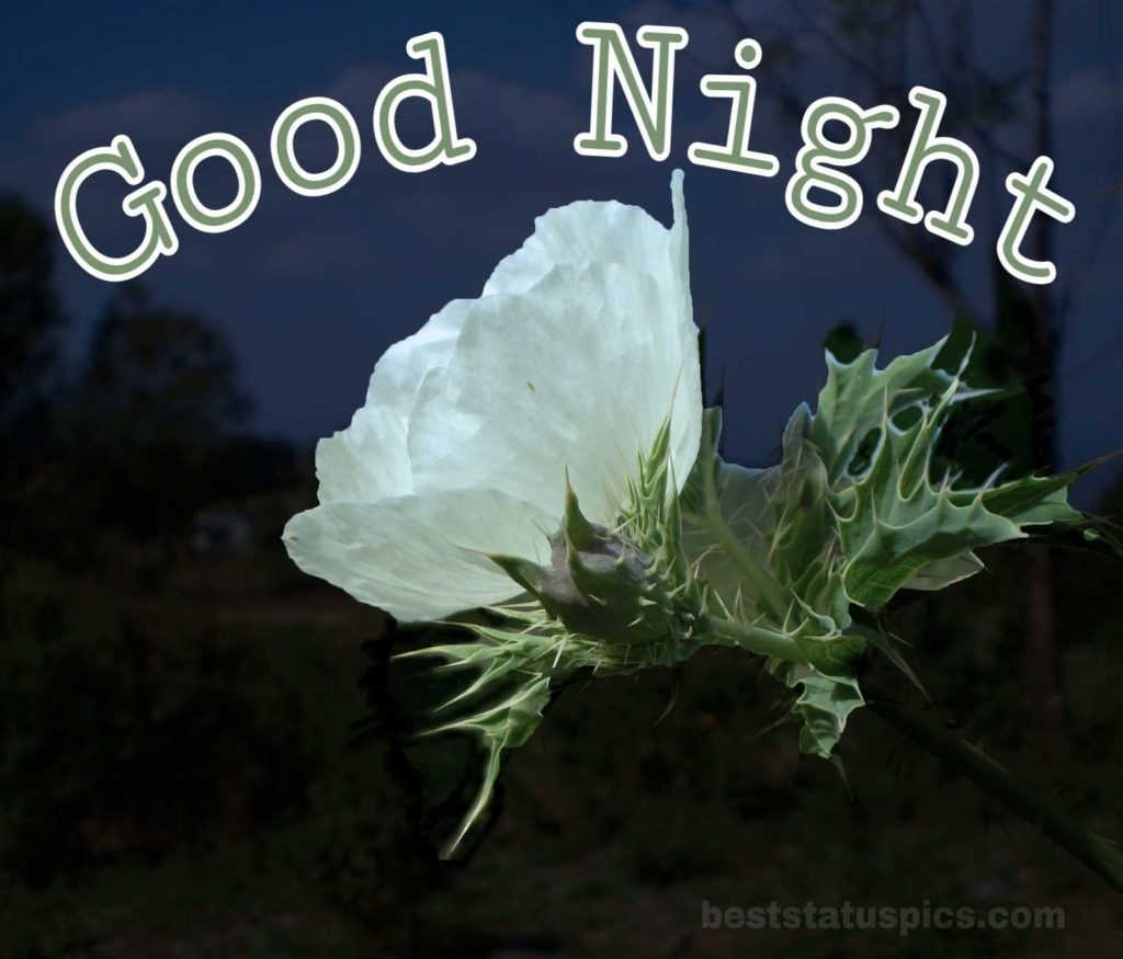 Good night flower HD image