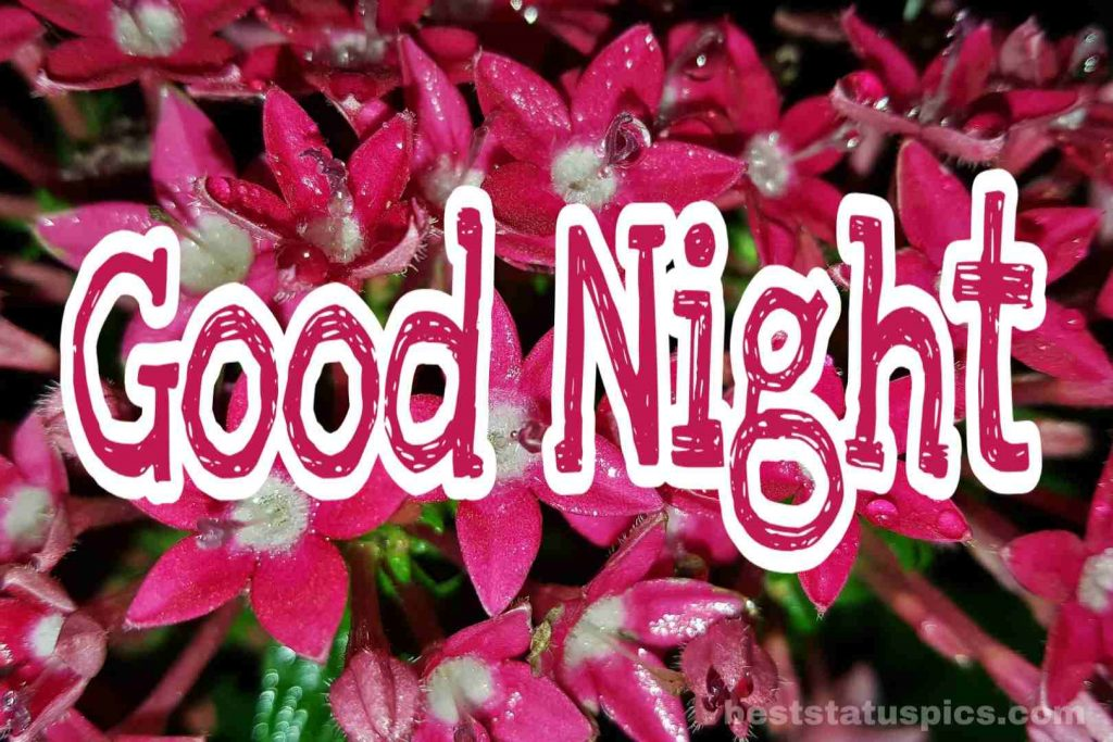 Good Night Flowers Image