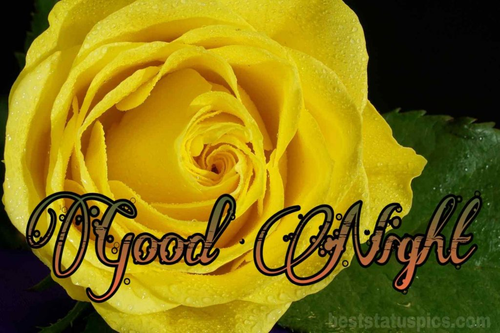 Good night yellow rose image