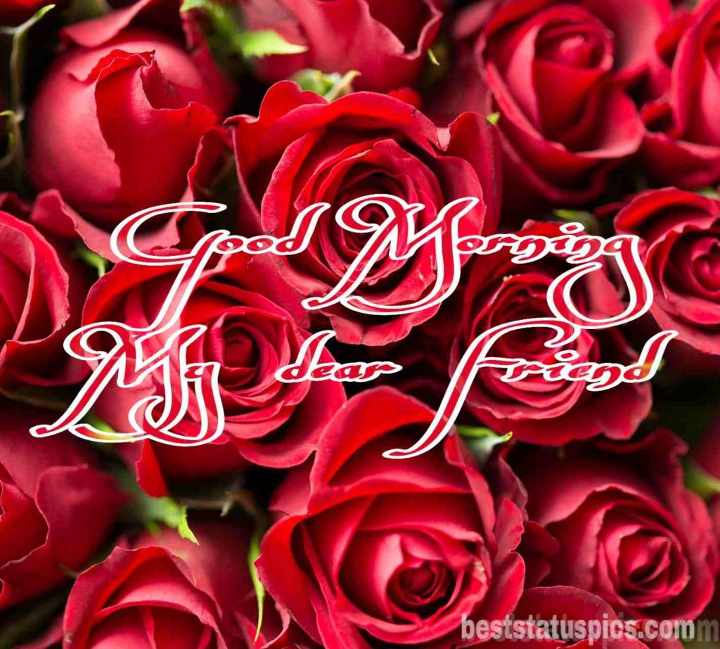 Good morning friends images with rose flowers