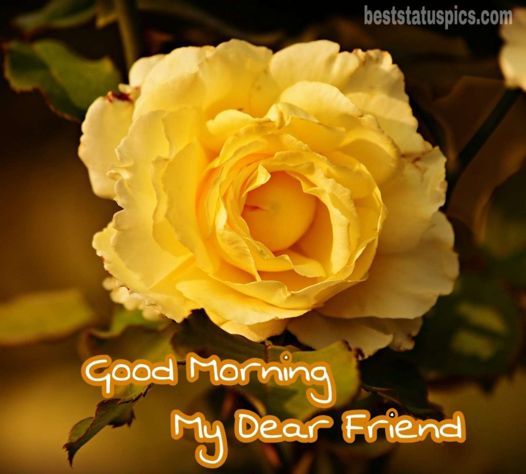 Good morning friends photo with yellow rose