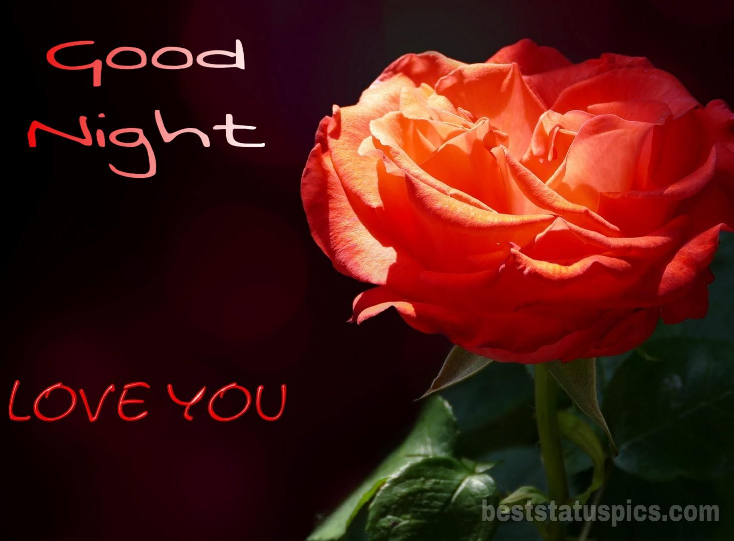 121 Good Night I Love You Images Hd Free Download Best Status Pics