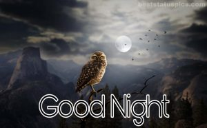 Good night nature moon images with bird