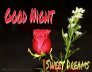Good night rose images