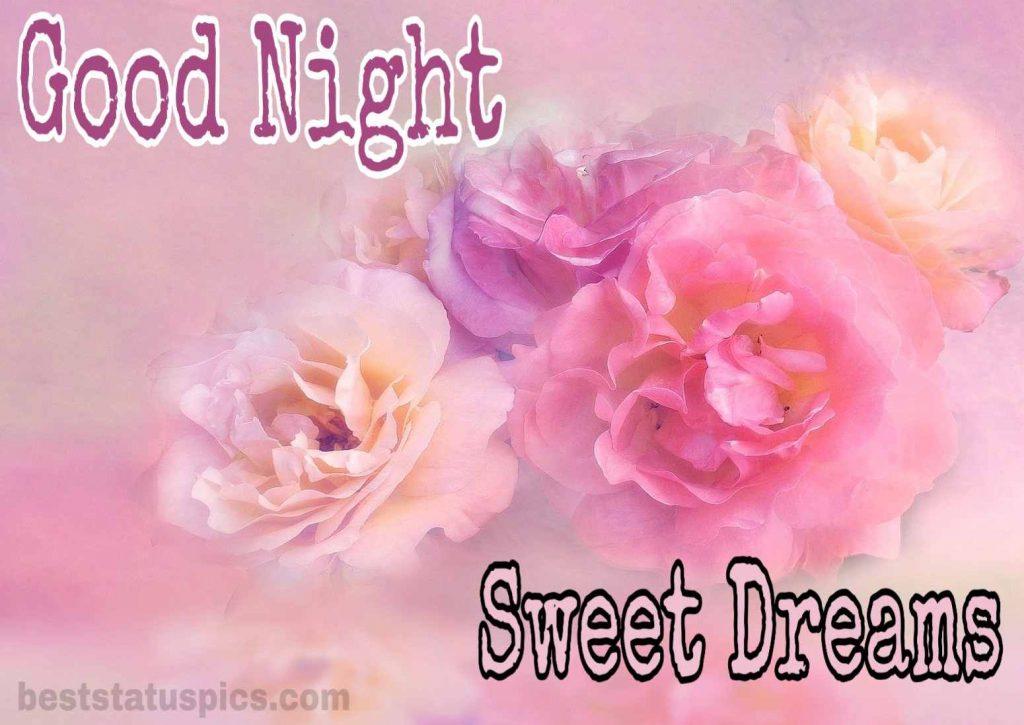 Good night pink rose images HD