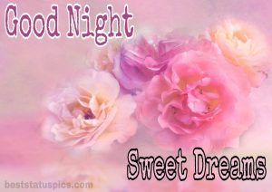 Good night pink rose images HD