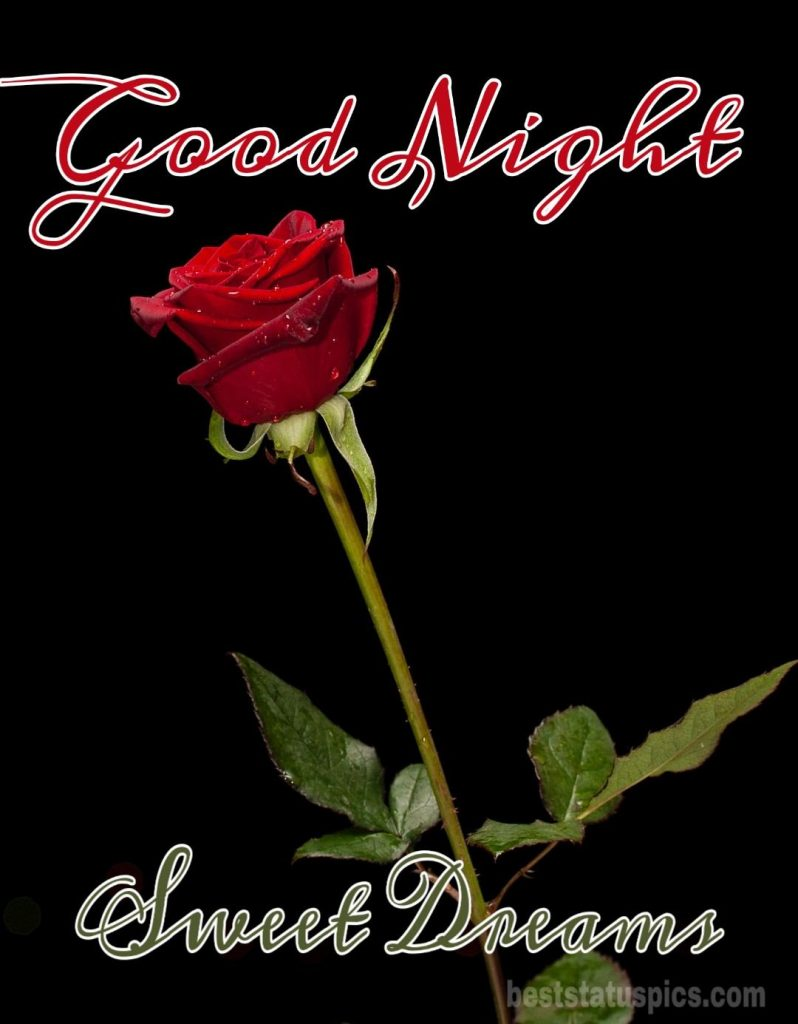 Lovely good night rose images
