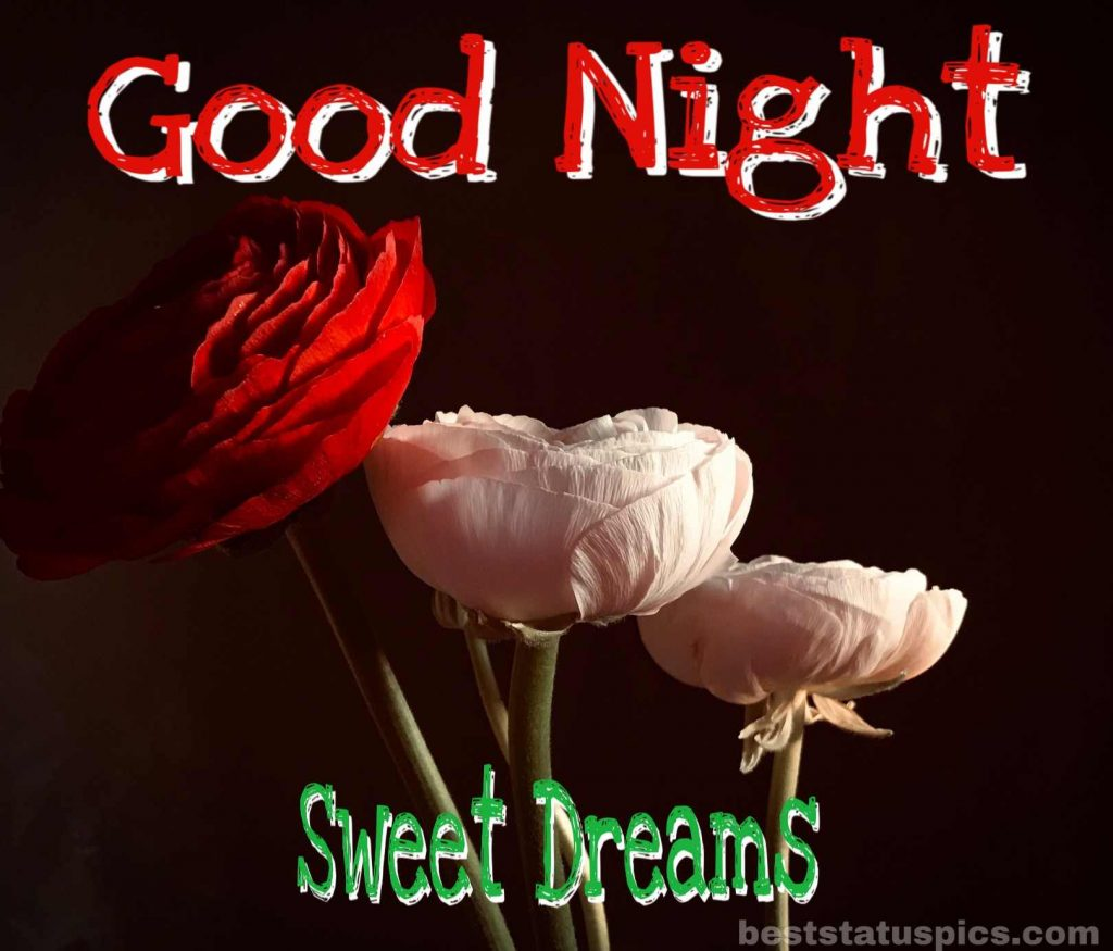 Good night images in rose flowers HD