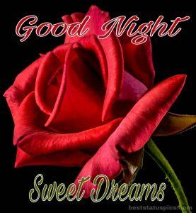 Good night red rose pic hd