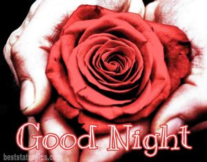 Rose flower good night images HD