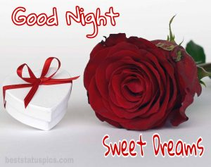 Good night pic rose love