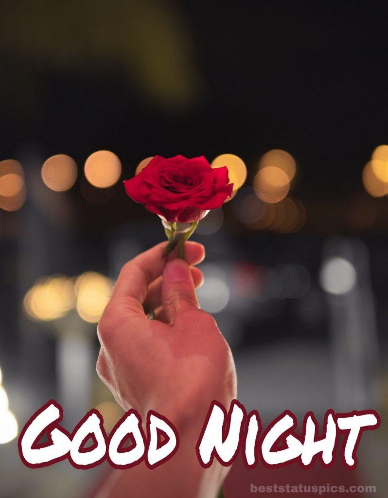 Good night rose images download